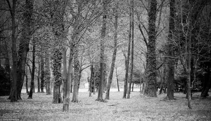trees+